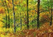 Autumn Glow image.jpg