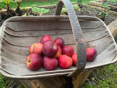 Apples barley wood
