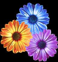 floral arange.png