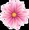 flower1_edited.png
