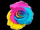roses2_edited.png