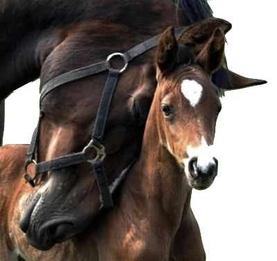 horses copy