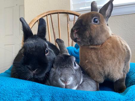 Full Spectrum Hemp to help with the Success of Rabbit Bonding