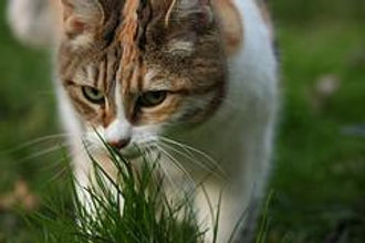 Cat Kips of the plant therapy