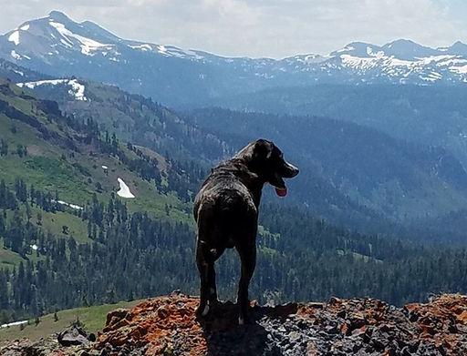 pic fb dog.jpg