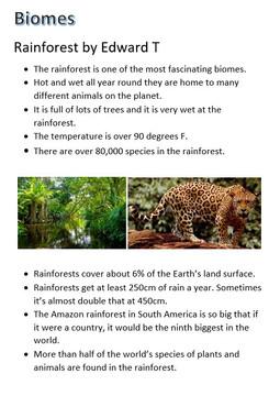 et rainforest.jpg