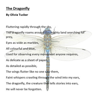 dragon fly ot.jpg