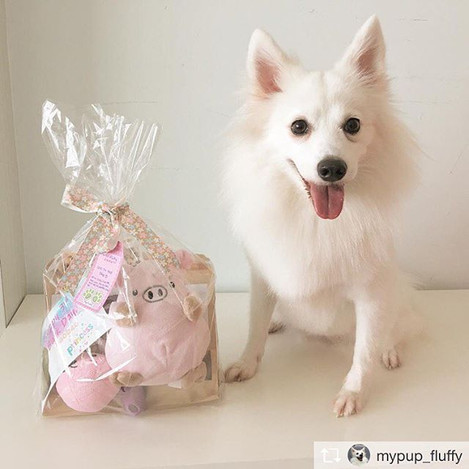 Customized Bark day gift hamper specially crafted for baobao princess, Fluffy! Glad that Fluffy loves our treats! 🤗__Repost from _mypup_fluf