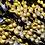 Thumbnail: AceJód 60X150um