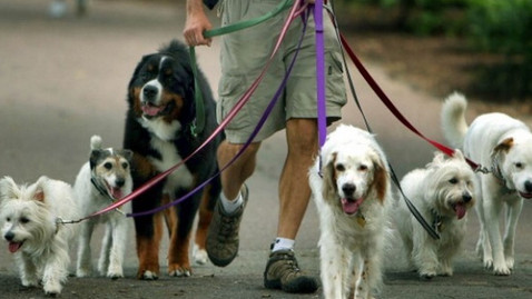 Dog Walkers e Pet Sitters