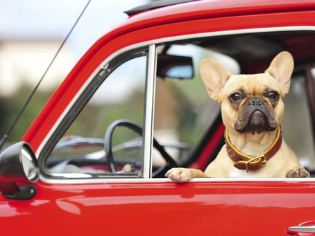 犬ちゃんと楽しいドライブ!!