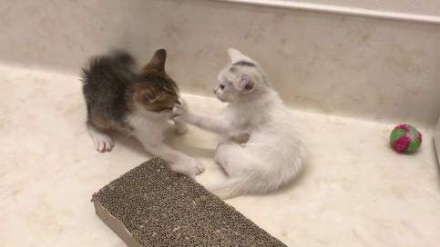 【動画追加】子猫ちゃんの里親募集㉒&㉓→7/19、2匹とも決定!!