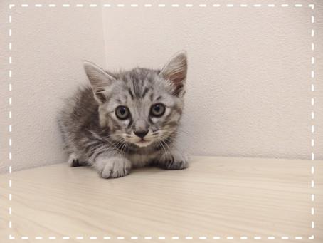 【お知らせ】6/19(水)の午後診療は17時30分から!!