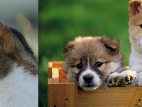<期間限定>2018春の犬猫ちゃん健康診断キャンペーン