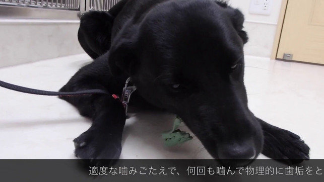 歯磨きガムの与え方(犬) とおやま犬猫病院