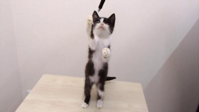 子猫ちゃんの里親募集㉕→7/18決定しました