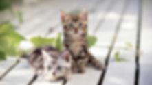 とおやま犬猫病院 中津川 動物病院 美乃坂本