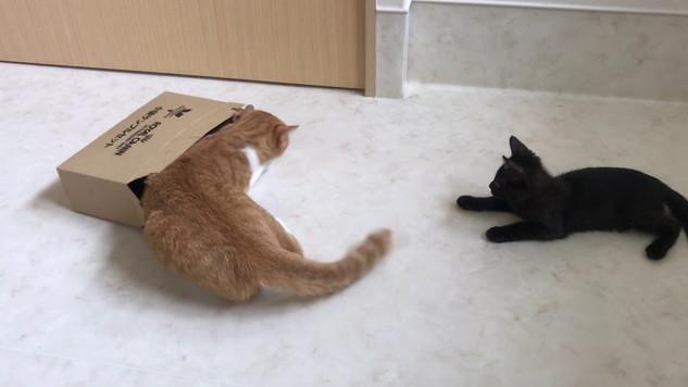 りゅうと黒猫ちゃん(里親募集中)