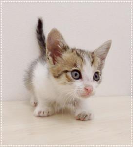 子猫ちゃんの里親募集㉒