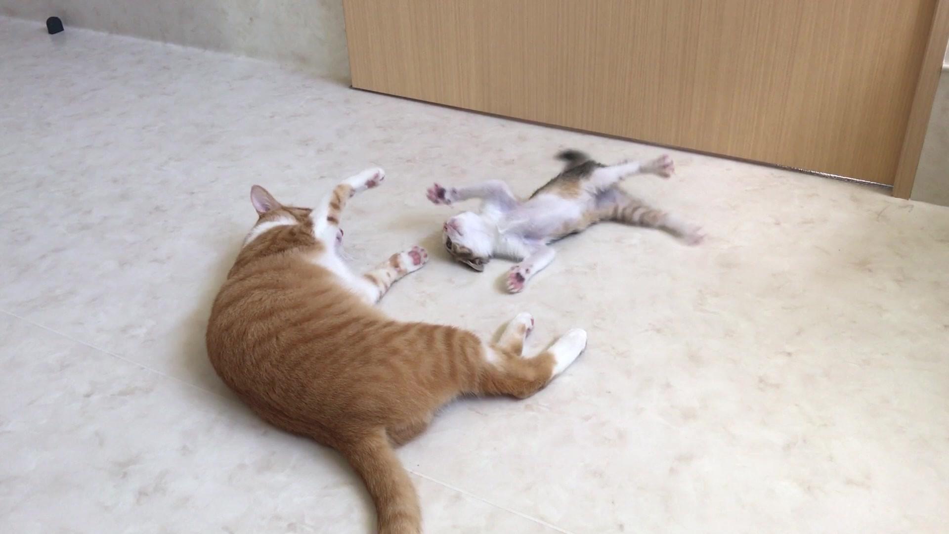 リュウ VS 圭 壁蹴り.mp4