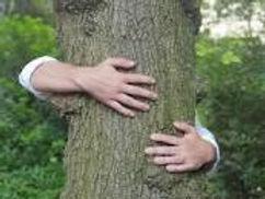 calin aux arbres.jfif