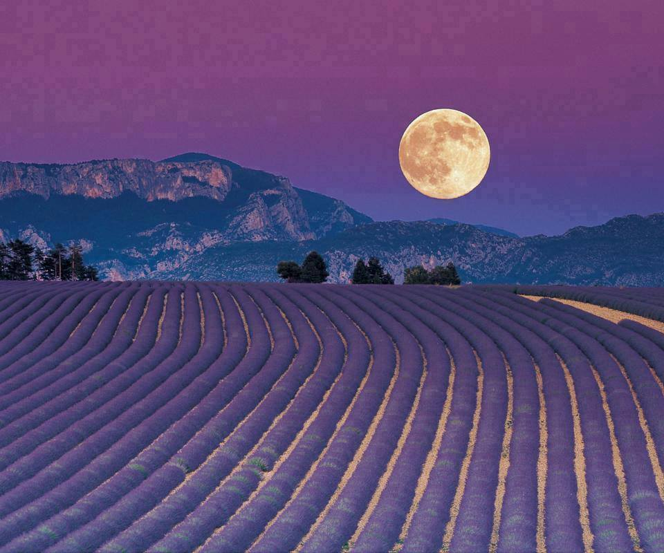 lavendar moon.jpg