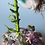 Thumbnail: Naia, Monterey Bay mermaid