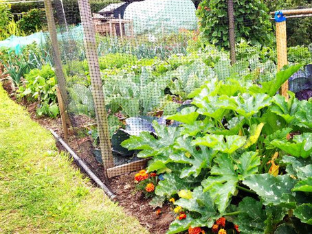The Allotment Years