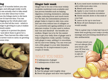 Growing Ginger for your hair