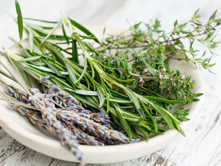Five Healing Plants to Grow in Your Garden