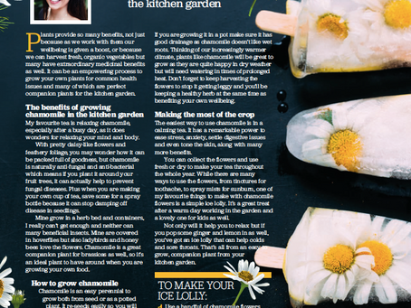 Grow Your Own Magazine - The Health Boosting Benefits of Chamomile