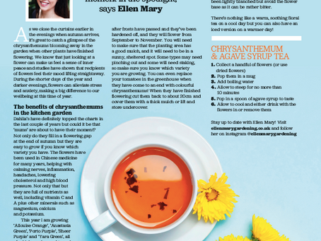 Grow Your Own Magazine - The Wellbeing Benefits of Chrysthanthemums