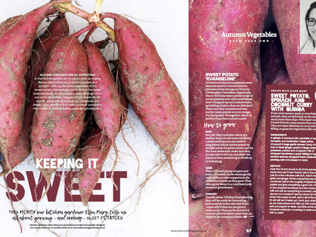 Grow & Cook Sweet Potato