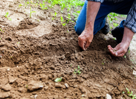 Tips To Make Your Garden Thrive As A Beginner