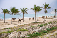 Myghsail Kamele