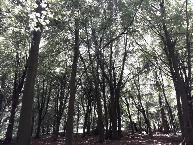 wendover woods - Nikki Verster.jpg