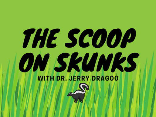 The Scoop on Skunks With Dr. Jerry Dragoo