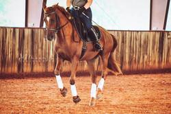 Aurora (4Him Training horse)