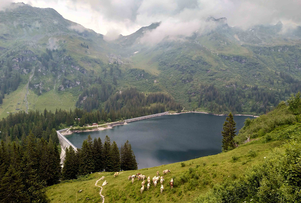 A view from the mountain rim on cows on Mettmenalp and Garichti reservoir