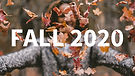 fall-2020.jpg