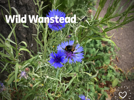 More wildflowers on our streets this summer