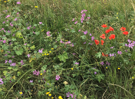 Help plant wildflowers on Christ Church Green