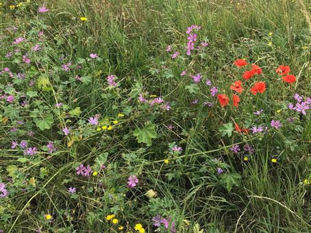 Help plant wildflowers on Christ Church Green