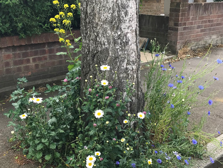 Adopt-a-tree-pit and get your street buzzing