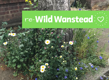 Help re-wild Wanstead this spring by planting seeds under a street tree