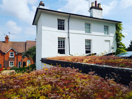 Find out how to turn your extension roof into a garden in the sky (and reduce bills!)