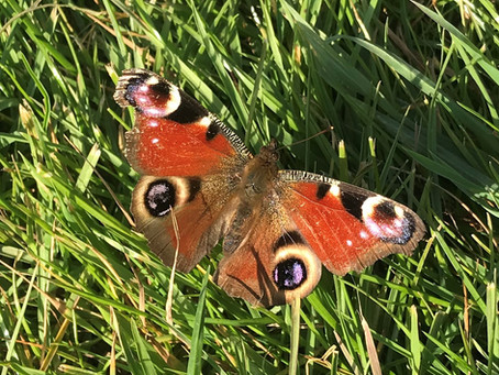 Let's make Redbridge nature policy more ambitious