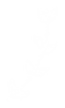 CGW-ICON-RGB_RIGHT-BRANCH-WHT.png
