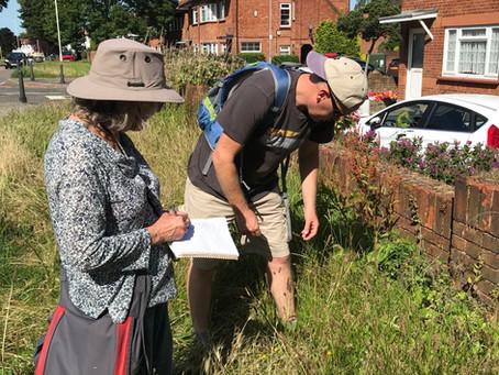 Survey reveals astonishing plantlife in Wanstead's Grow Zone verges