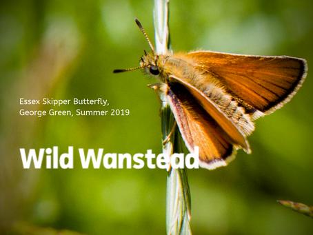 Re-wilding Wanstead
